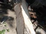log wedged